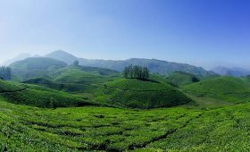 Munnar gets app to guide tourists visiting the hill station