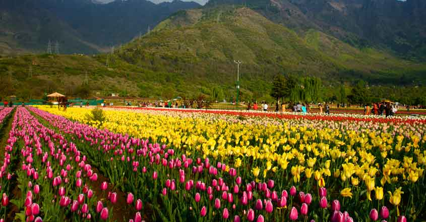 Jammu and Kashmir: Asia's largest tulip garden overlooking Dal Lake opens for public in Srinagar